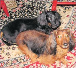 Daisy and Rascal on the rug-tn