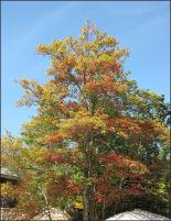 Fall Trees in Tenn.